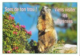 Animaux Humoristiques - Marmotte Des Pyrénées - Animals