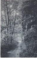 CPA N&b  HOUYET, Parc Du Château Royal D'Ardenne - 1908 - Houyet