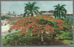 CP  FF-218-The Famous Plaza De Francia With Its Beautiful Acacia Trees In Panama City. Unused - Panama