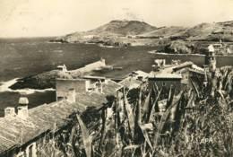 CPM   Collioure  Entrée Du Port - Collioure
