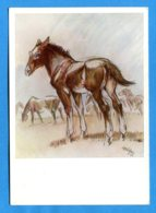NY042, Poulain, Illustrateur Cefischer, 2103, GF, Non Circulée - Cavalli