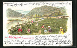 Lithographie Thee Heinr. Wilh. Schmidt, Frankfurt A/M, Ernte In Asien - Non Classés
