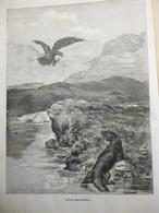 Entre Braconniers , Un Aigle Et Une Loutre , Gravure De Stenens 1886 - Documenti Storici