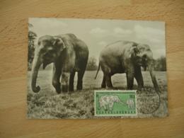 Tchecoslovaquie  Elephant  Cm C M Carte Maximum - Sonstige