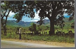 CP FF-679- A Picturesque Countryside In The Interior Of The Republic Of Panama . Unused - Panama