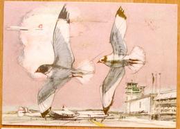 """Schweiz Suisse 1953: """"Vögel Oiseaux"""" Ouverture Airport Kloten Zu 313 Mi 485 Yv 536 O ZÜRICH 30.VIII.53 (Zu CHF 32.00) - Suisse"""