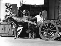 Photo Inde Calcutta Tranports De Matériaux Par Charrette Attelée  Ph. Vivant Univers - Lieux