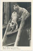 Chat - Cat - Kat - Katze - 4995 - Katten