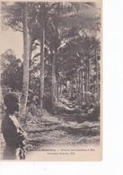 NOUVELLES HEBRIDES(TYPE) ARBRE - Vanuatu