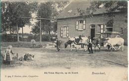Brasschaat Bij Trien Meyvis Op De Kaart. Hoelen 924 - Brasschaat