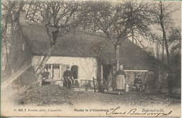 Berendrecht Hoefje In De Olmedreef Hoelen 668 - Belgique