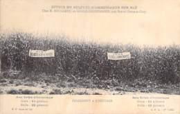 AGRICULTURE Culture - RENDEMENT A L'HECTARE : Effets Du Sulfate D'Ammoniaque Sur Le Blé Au GRAND HERTELOUP 60 Oise - Cultures