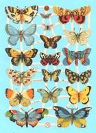 Feuille Complète De Chromos Découpis. Papillons. Volle Seite Von Glanzbild Scrap. Schmetterlinge. - Dieren