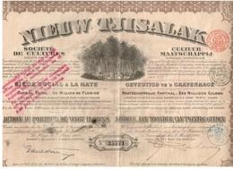 Titre Ancien - Nieuw Tjisalak Société De Cultures - Sté Anonyme - Titre De 1910 - - Agriculture