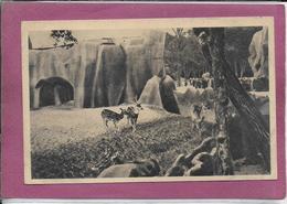 PARC ZOOLOGIQUE DU BOIS DE VINCENNES .- Le Parc Des Cerfs Axis Et Des Nilgauts - France