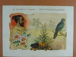 Edit.Nathan (12,5 Cm X 9 Cm) A Travers Le Monde (historique Au Verso) Nouvelle-Zélande Animal : Strigops Habroptile /04/ - Chromos