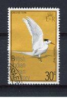 OCEAN INDIEN - Y&T N° 67° - Oiseau - Thallasseus Bergii - Territoire Britannique De L'Océan Indien