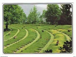 COSTERMANO (VR):   DEUTSCHER  SOLDATENFRIEDHOF  -  F.LLO  TOLTO  -  PER  LA  GERMANIA  -  FG - Cimiteri Militari