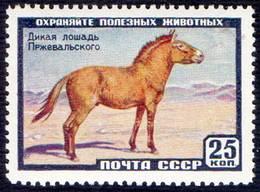 RUSSIA - SSSR - Przewalski's Wild Horse  - **MNH - 1959 - Cavalli