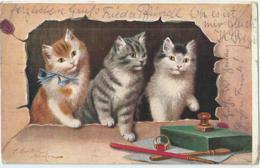 Chat - Cat - Kat - Katze - Sperlich - 1910 - Gatti