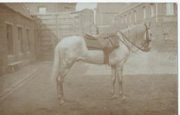 Cheval - Horse - Paard - Pferd - Pferde
