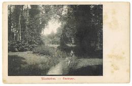 Westerlo: Environs (2 Scans) - Westerlo