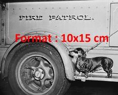 Reproduction D'une Photographie Ancienne D'un Chien Teckel Sur Un Camion De Pompier Fire Patrol En 1950 - Reproductions