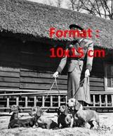 Reproduction D'une Photographie Ancienne D'une Jeune Femme Promenant 5 Chiens Teckel En Laisse En Campagne - Reproductions