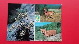 Deer.Fox.PLANIKA,SRNJAK,LISICA.FOTO:MIKEC-MOHAR - Tierwelt & Fauna