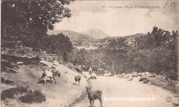 20 La Corse Route De Calacuccia Calaccucia (golo Morosaglia Corte)  Goat Chevre RARE - France