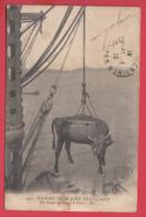 Guerre 1914 -MARINE MILITAIRE - On Hisse Un Boeuf à Bord- 2 SCANNS - Oorlog 1914-18