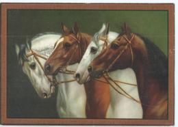 Cheval - Horse - Paard - Pferd - D.R.G.M. Nr 29666 - Caballos
