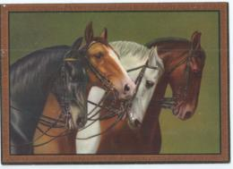 Cheval - Horse - Paard - Pferd - D.R.G.M. Nr 29665 - Caballos