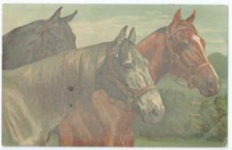 Cheval - Horse - Paard - Pferd - No 949 - 1917 - Chevaux