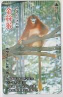 ANIMALS - JAPAN-107 - MONKEY - Japon