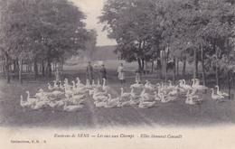 Sens Les Oies Aux Champs Elles Tiennent Conseil - Sens