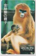 ANIMALS - JAPAN-111 - MONKEY - Japon