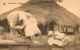 Afrique Du Sud - Kinshasa - Machoires Et Cranes D'Elephant Et D'Hippopotame - Sudáfrica
