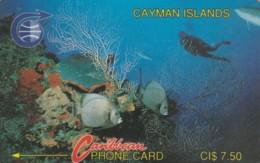 PHONE CARD CAYMAN (E58.7.5 - Isole Caiman