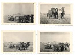 LOT 4 ANCIENNES PHOTOS CHARRUE, ATELAGE TROIS CHEVAUX, LABOUR, LABOURAGE, AGRICULTURE - Foto's