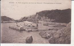 Giens - Port Auguier (en Face De Ribaud), Pins Penchés Et Falaises - Hyeres