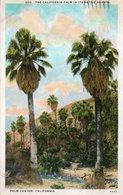 PALM CANYON-CALIFORNIA-1928 - Non Classificati