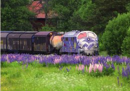 NOHAB Diesel-electric Locomotive No.MY1125 Of DSB In Kristinehamn (Sweden) In 2007 -  CPM - Trains