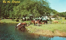 GREETINGS FROM FORT DODGE-KANSAS-BY THE STREAM-1966 - Stati Uniti