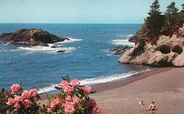 PACIFIC OCEAN SEACOAST - Stati Uniti