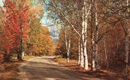 GREETINGS FROM PARAMOUS-N.J.-A COUNTRI ROAD IN AUTUMN - Stati Uniti