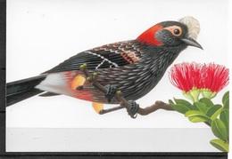 US Post Card, Birds, Crested Honeycreeper 20c,VF Unused, Unposted !!! - Birds