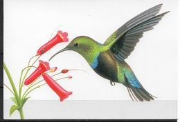 US Post Card, Birds, Green-throated Carib 20c,VF Unused, Unposted !!! - Birds