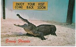Crocodiles- Alligators,,Vintage Post Card, American Alligator, National Park, Florida,VF Unused  !! - Fish & Shellfish
