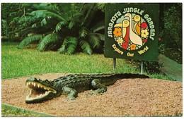 Crocodiles- Alligators,,Vintage Post Card, American Alligator, Sarasota Jungle Gardens, Florida,VF Unused  !! - Fish & Shellfish